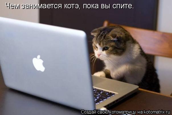 Котоматрица: Чем занимается котэ, пока вы спите.