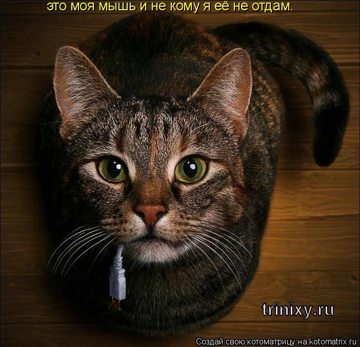 Котоматрица: это моя мышь и не кому я её не отдам.