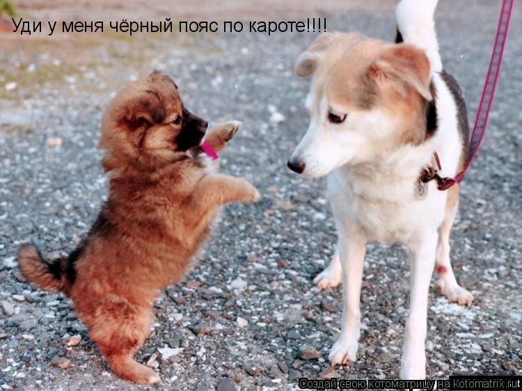 Котоматрица: Уди у меня чёрный пояс по кароте!!!!