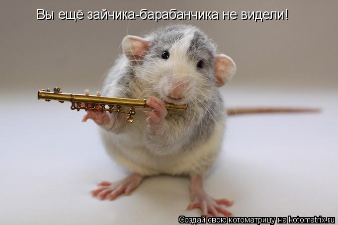 Котоматрица: Вы ещё зайчика-барабанчика не видели!