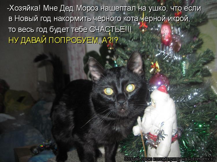 Котоматрица: -Хозяйка! Мне Дед Мороз нашептал на ушко, что если в Новый год накормить черного кота черной икрой, то весь год будет тебе СЧАСТЬЕ!!! НУ ДАВАЙ
