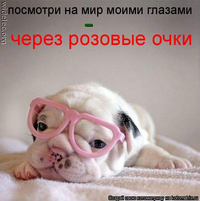 Котоматрица: посмотри на мир моими глазами - через розовые очки