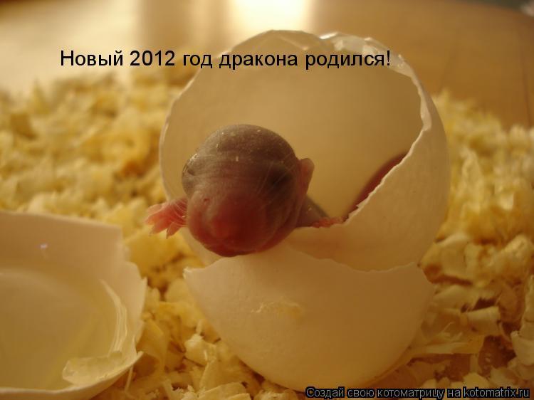 Котоматрица: Новый 2012 год дракона родился!