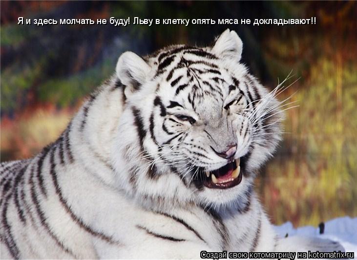 Котоматрица: Я и здесь молчать не буду! Льву в клетку опять мяса не докладывают!!