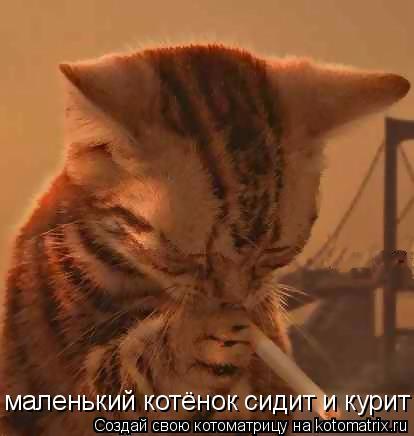 Котоматрица: маленький котёнок сидит и курит