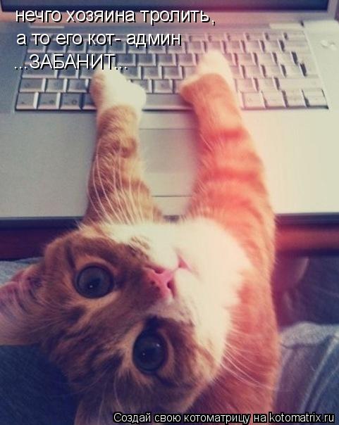 Котоматрица: нечго хозяина тролить а то его кот- админ ...ЗАБАНИТ... ,
