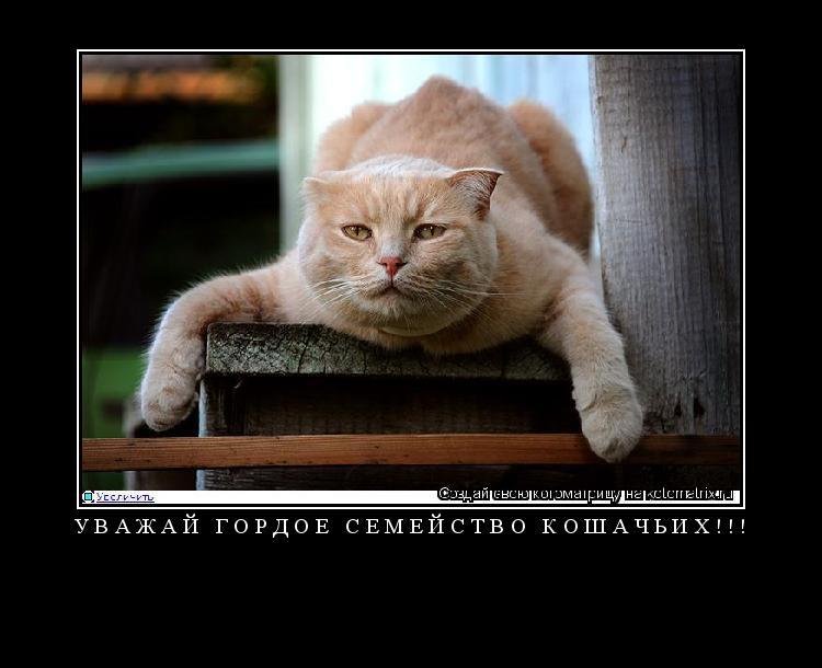 Котоматрица: Уважай гордое семейство кошачьих!!!