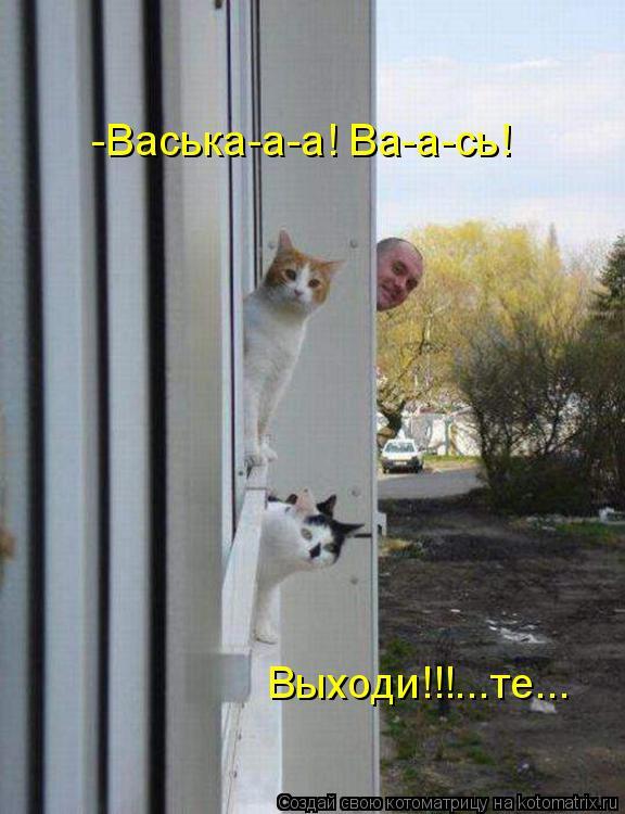 Котоматрица: -Васька-а-а! Ва-а-сь! Выходи!!!...те...