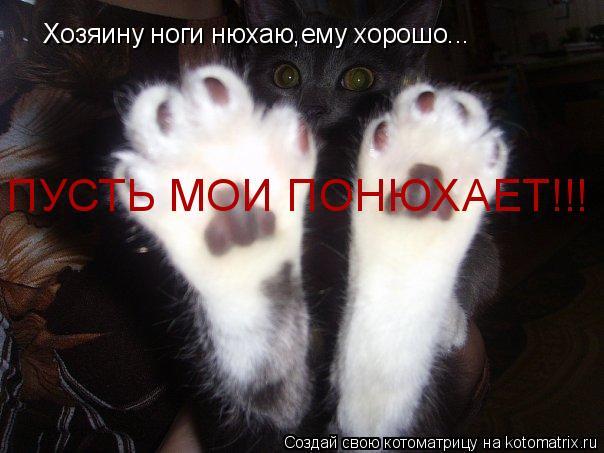 Котоматрица: Хозяину ноги нюхаю,ему хорошо... ПУСТЬ МОИ ПОНЮХАЕТ!!!