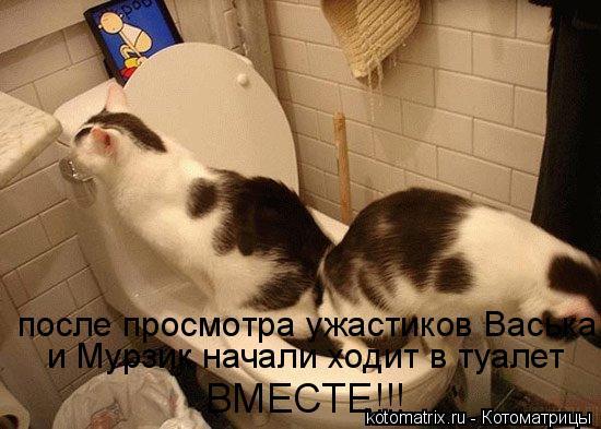 Котоматрица: после просмотра ужастиков Васька  и Мурзик начали ходит в туалет  ВМЕСТЕ!!!