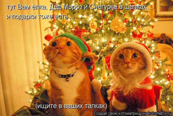 Котоматрица: тут Вам ёлка, Дед Мороз и Снегурка в шапках... и подарки тоже есть ... (ищите в ваших тапках)