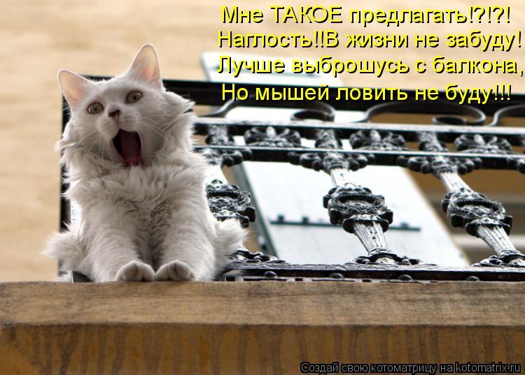 Котоматрица: Мне ТАКОЕ предлагать!?!?! Наглость!!В жизни не забуду! Лучше выброшусь с балкона, Но мышей ловить не буду!!!