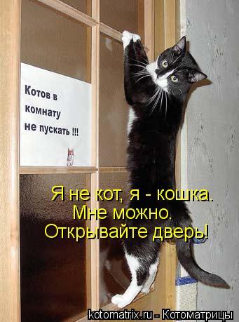 Котоматрица: Я не кот, я - кошка. Мне можно. Открывайте дверь!