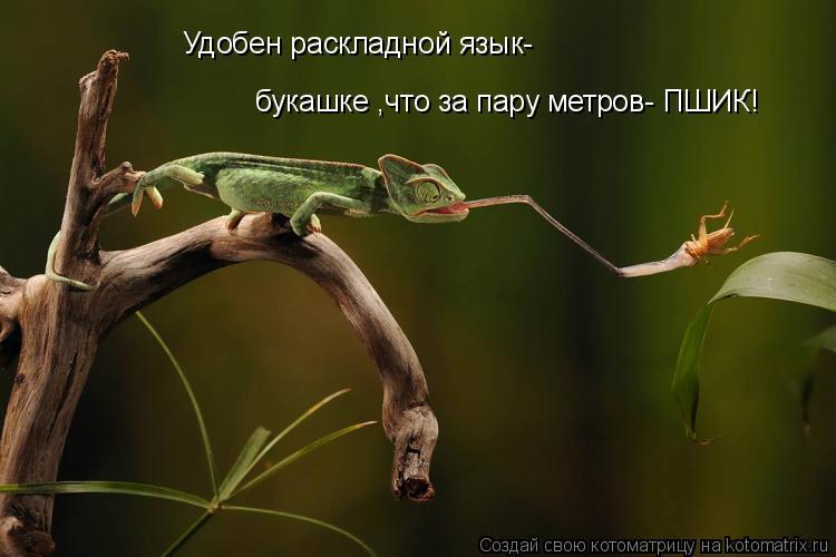 Котоматрица: Удобен раскладной язык- букашке ,что за пару метров- ПШИК!