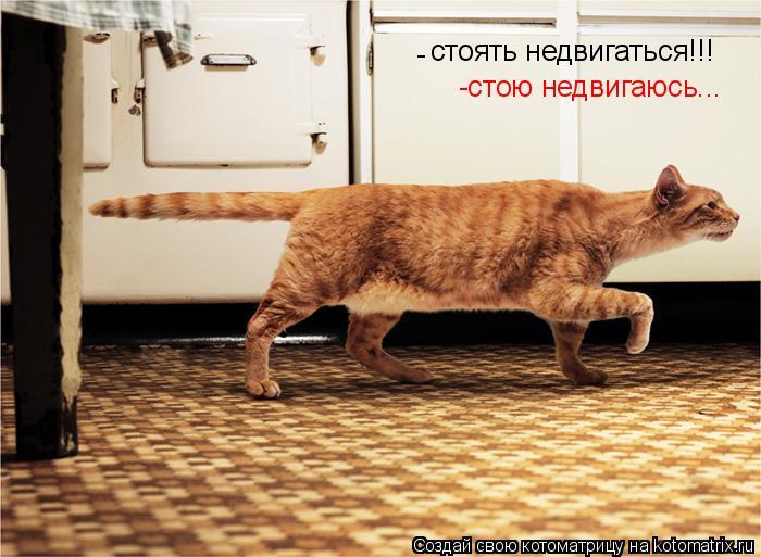 Котоматрица: стоять недвигаться!!! -стою недвигаюсь... -