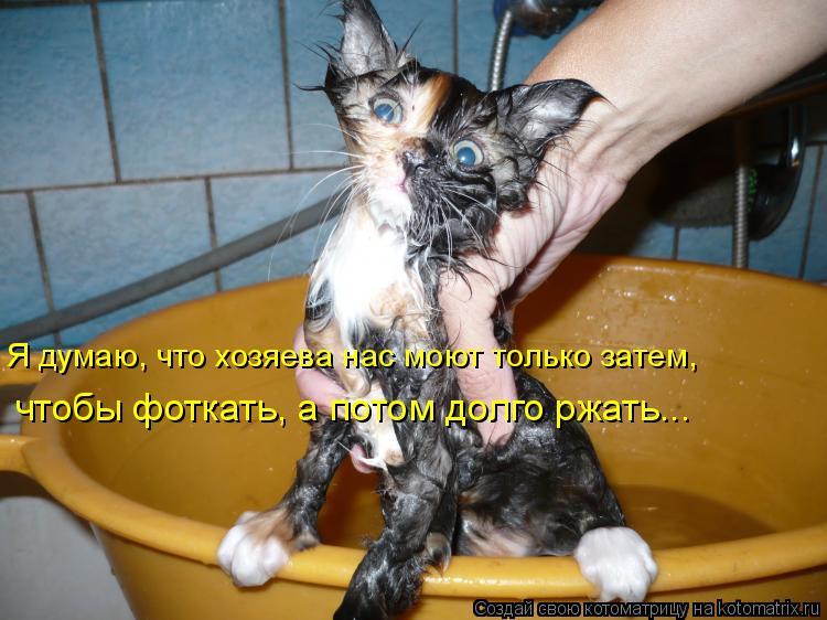 Котоматрица: Я думаю, что хозяева нас моют только затем, чтобы фоткать, а потом долго ржать...