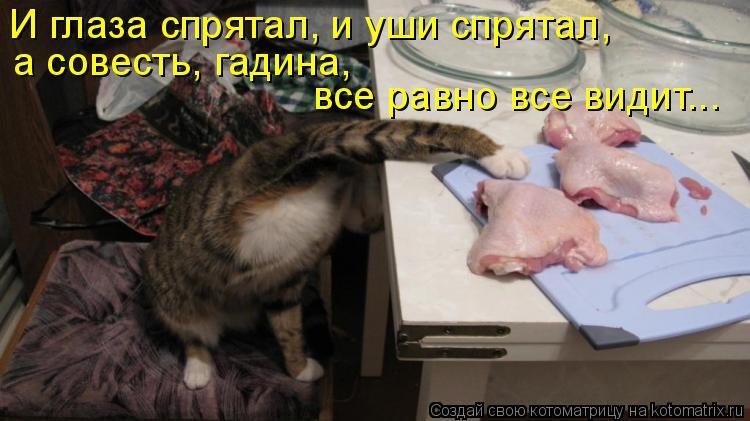 Котоматрица: И глаза спрятал, и уши спрятал, а совесть, гадина,  все равно все видит...