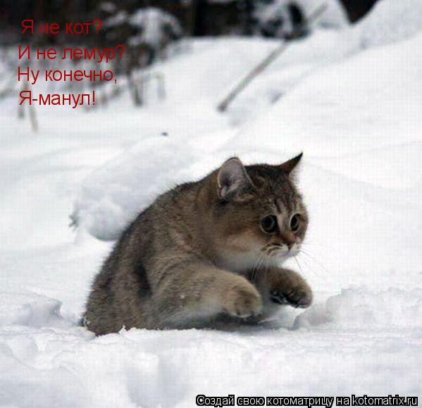 Котоматрица: Я не кот? И не лемур? Ну конечно, Я-манул!