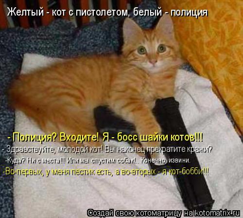 Котоматрица: Желтый - кот с пистолетом, белый - полиция - Полиция? Входите! Я - босс шайки котов!!! - Здравствуйте, молодой кот! Вы наконец прекратите кражи? -К