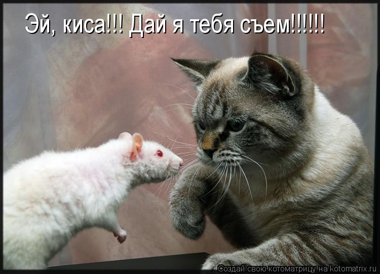 Котоматрица: Эй, киса!!! Дай я тебя съем!!!!!!