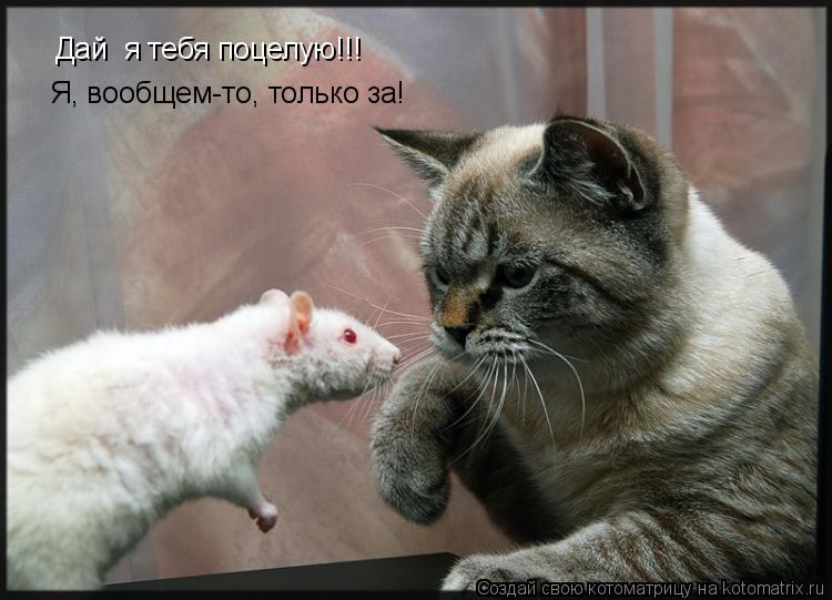 Котоматрица: Дай  я тебя поцелую!!! Я, вообщем-то, только за!
