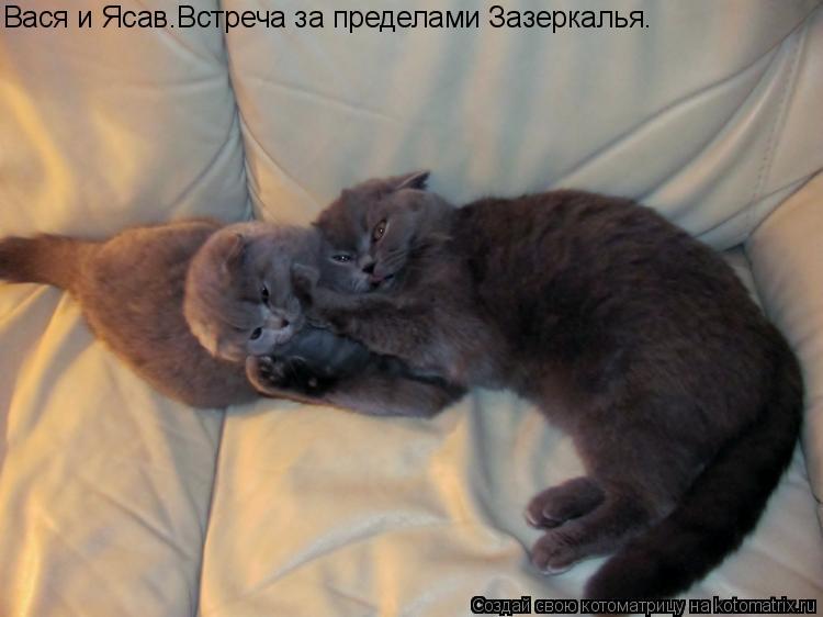 Котоматрица: Вася и Ясав.Встреча за пределами Зазеркалья.