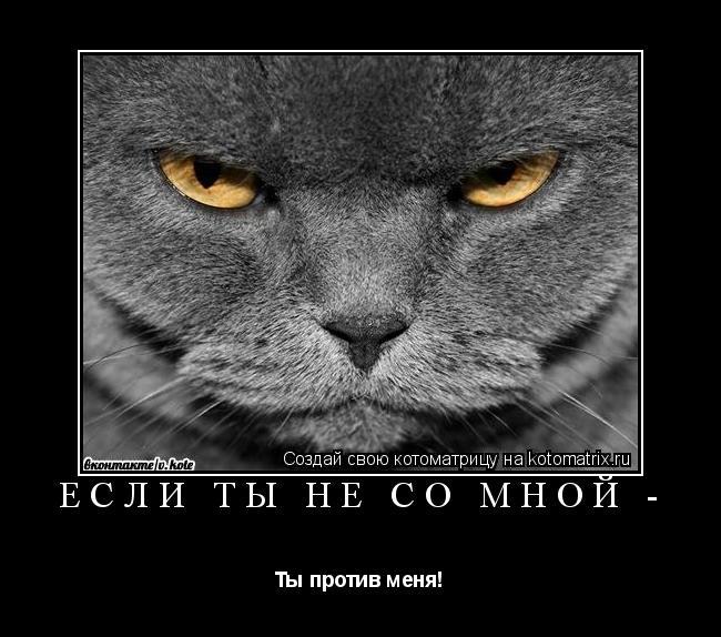 Котоматрица: Если ты не со мной - Ты против меня!
