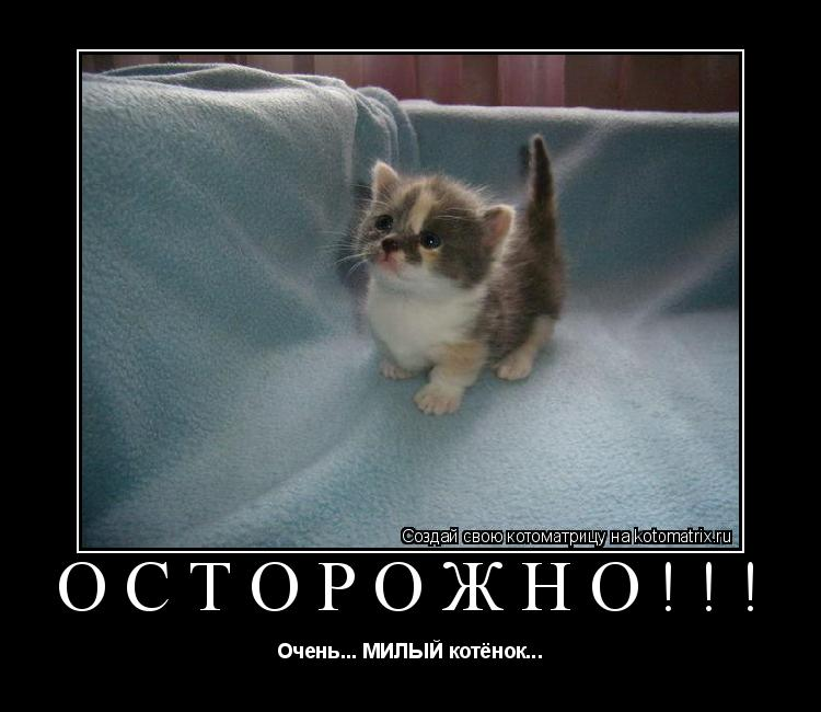 Котоматрица: Осторожно!!! Очень... МИЛЫЙ котёнок...