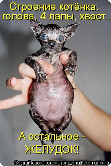 Котоматрица: Строение котёнка: голова, 4 лапы, хвост... А остальное -  ЖЕЛУДОК!