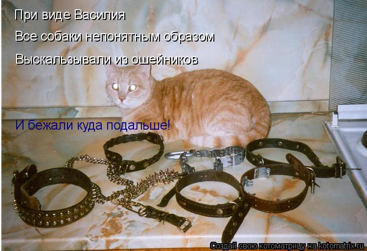 Котоматрица: При виде Василия Все собаки непонятным образом Выскальзывали из ошейников И бежали куда подальше!
