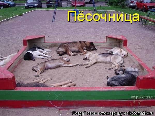 Котоматрица: Пёсочница