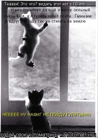 Котоматрица: Таааак! Это что? видать этот кот с 10-ого   этажа спрыгнул да ещё и ветер сильный  очень был, а я гулять хотел пойти.  Гммммм  а вдруг и я буду так-