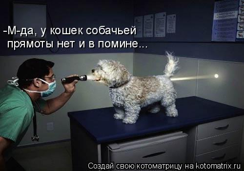 Котоматрица: -М-да, у кошек собачьей   прямоты нет и в помине...