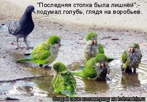 """Котоматрица: """"Последняя стопка была лишней"""",- подумал голубь, глядя на воробьев."""