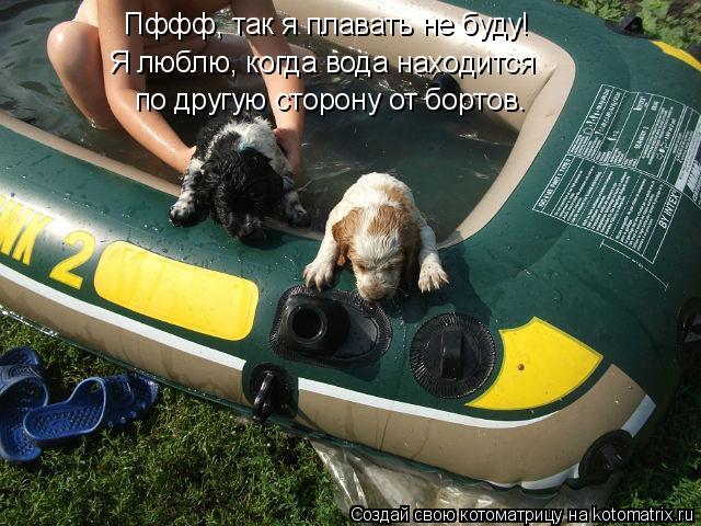 Котоматрица: Пффф, так я плавать не буду! Я люблю, когда вода находится по другую сторону от бортов.