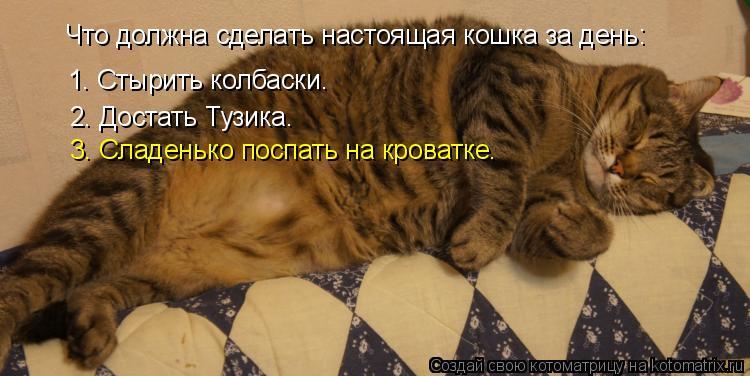 Котоматрица: Что должна сделать настоящая кошка за день: 1. Стырить колбаски. 2. Достать Тузика. 3. Сладенько поспать на кроватке.