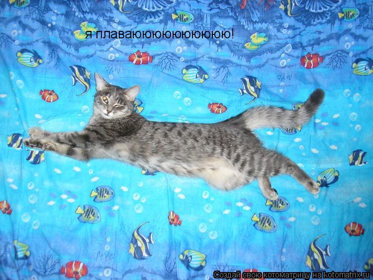 Котоматрица: я плаваюююююююююю!