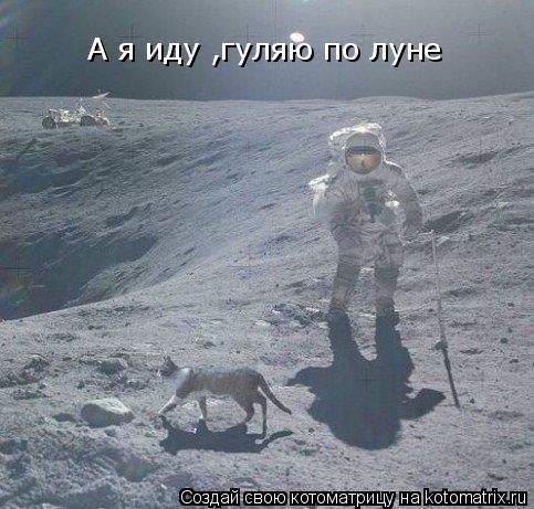 Котоматрица: А я иду ,гуляю по луне