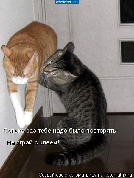 Котоматрица: Солько раз тебе надо было повторять:  Не играй с клеем!