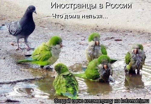 Котоматрица: Иностранцы в России Что дома нельзя...