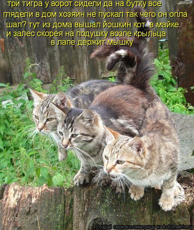 Котоматрица: три тигра у ворот сидели да на бутку все  глядели в дом хозяин не пускал так чего он опла шал? тут из дома вышал йошкин кот  в майке и залес ско
