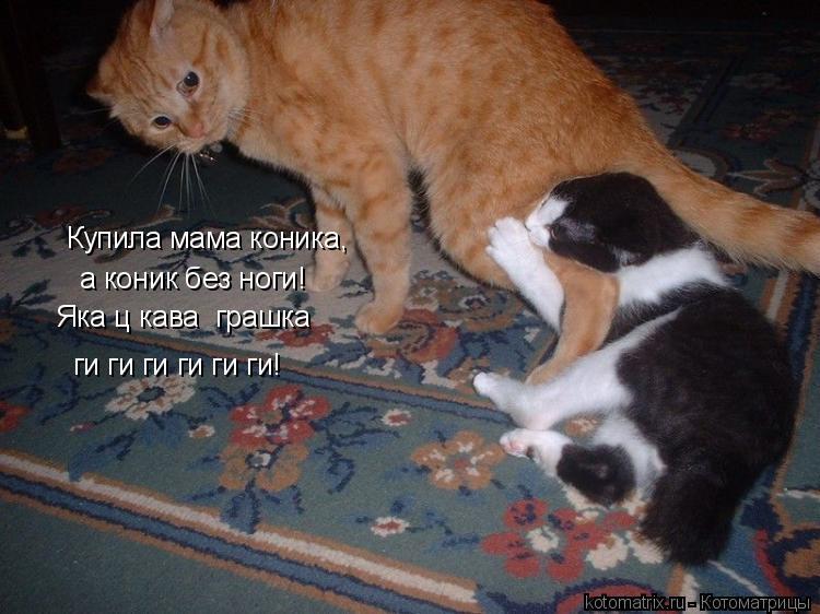 Котоматрица: Купила мама коника, а коник без ноги! Яка цікава іграшка ги ги ги ги ги ги!