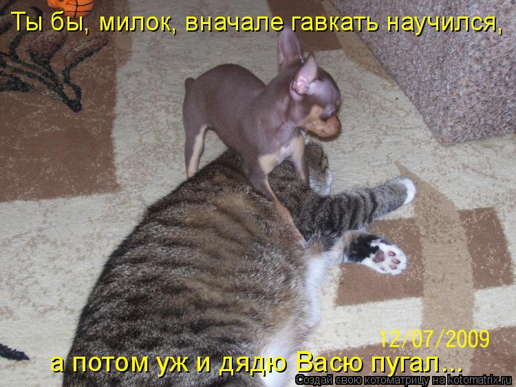 Котоматрица: Ты бы, милок, вначале гавкать научился,  а потом уж и дядю Васю пугал...