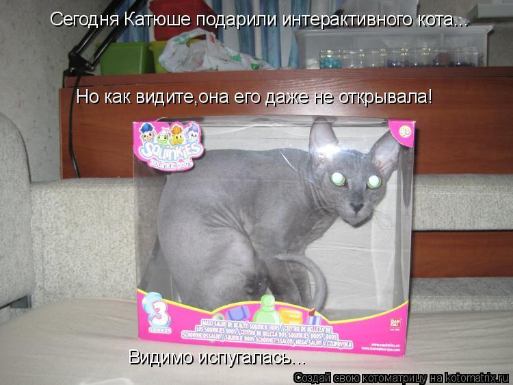 Котоматрица: Сегодня Катюше подарили интерактивного кота... Но как видите,она его даже не открывала! Видимо испугалась...