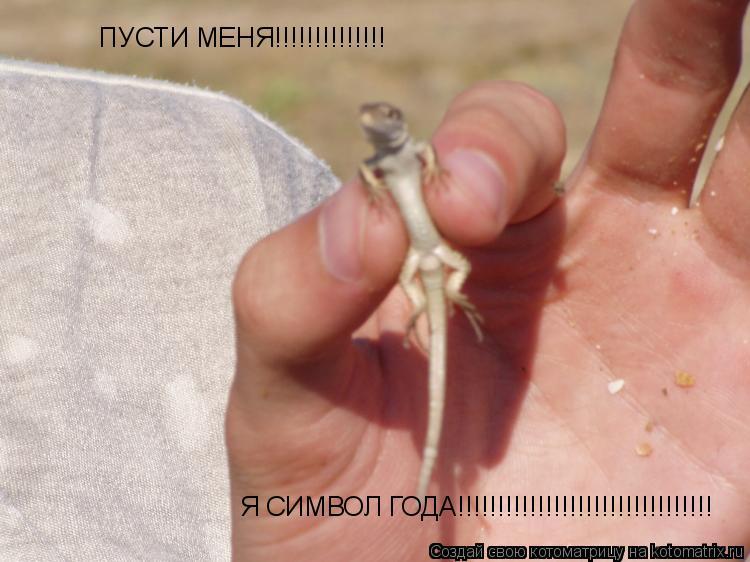 Котоматрица: ПУСТИ МЕНЯ!!!!!!!!!!!!!! Я СИМВОЛ ГОДА!!!!!!!!!!!!!!!!!!!!!!!!!!!!!!!!