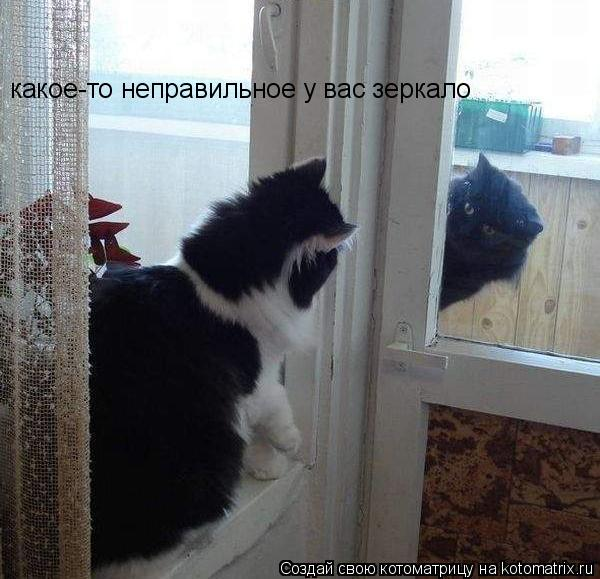 Котоматрица: какое-то неправильное у вас зеркало