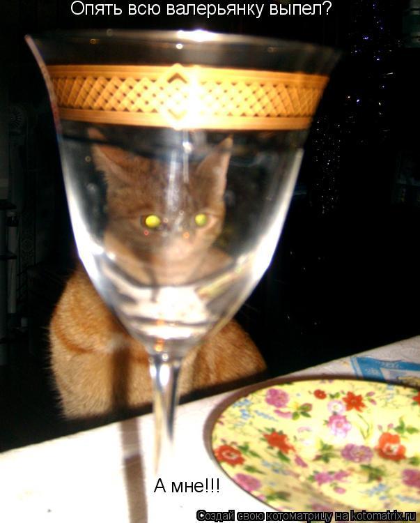 Котоматрица: Опять всю валерьянку выпел? А мне!!!