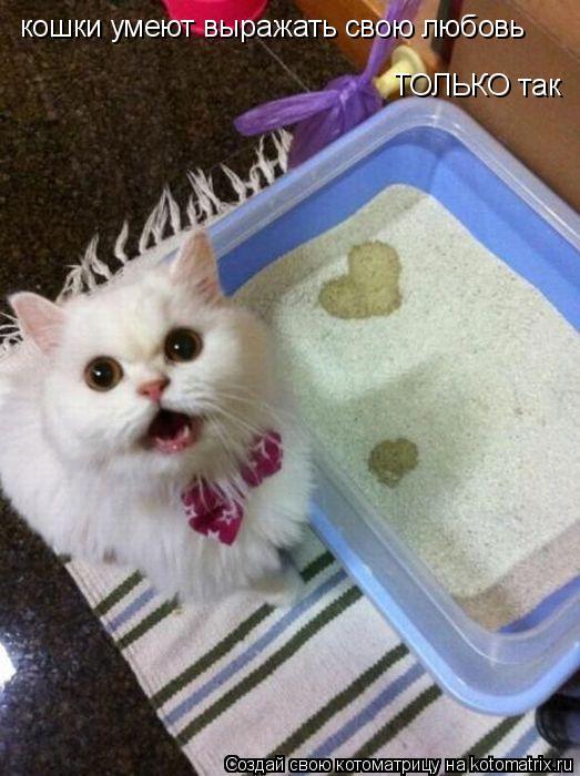 Котоматрица: кошки умеют выражать свою любовь ТОЛЬКО так