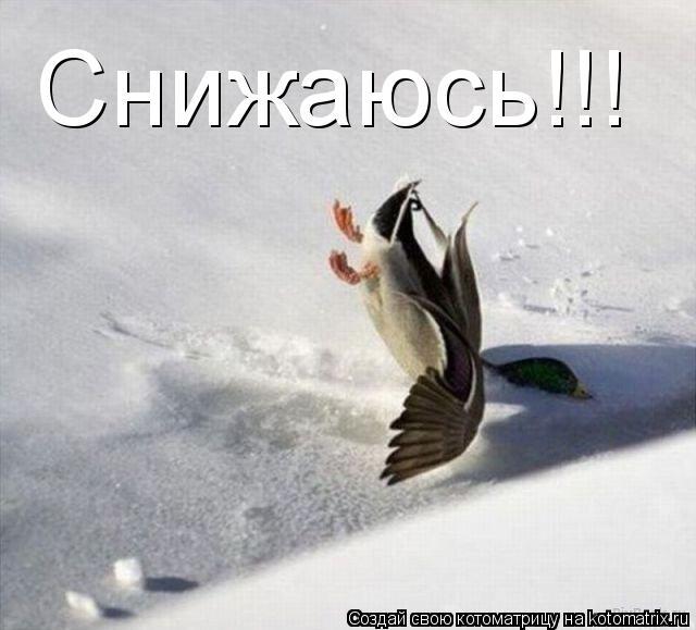 Котоматрица: Снижаюсь!!!