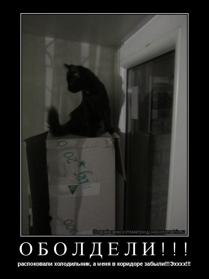 Котоматрица: ОБОЛДЕЛИ!!! распоковали холодильник, а меня в коридоре забыли!!!Эхххх!!!